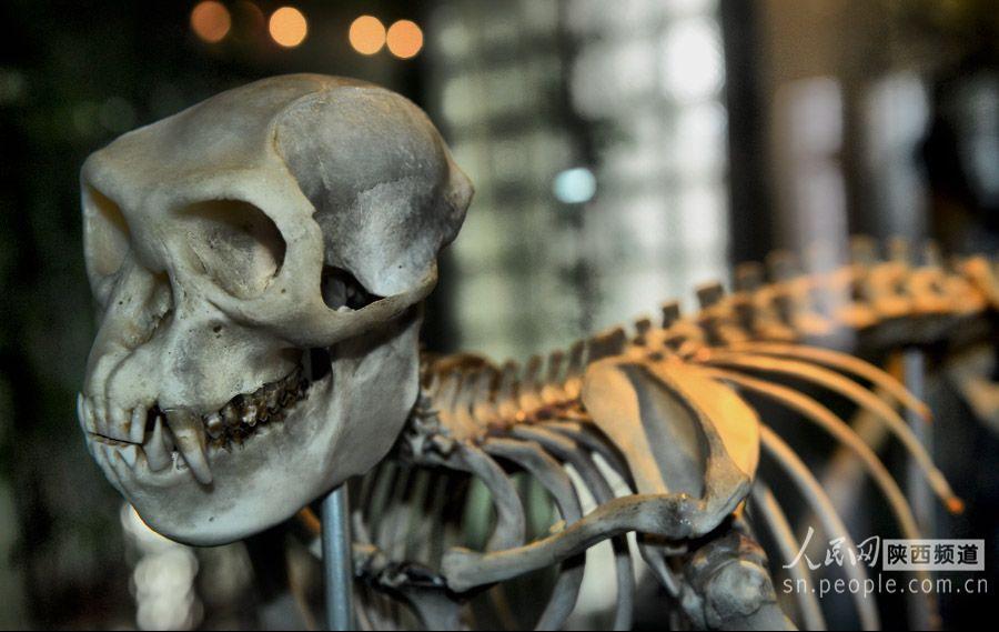佛坪县有个人与自然宣教中心。里面大都是秦岭的动植物标本和照片,还有些大熊猫、金丝猴、娃娃鱼骨骼。被列入全国首批科普教育示范基地的秦岭人与自然宣教中心位于佛坪县南的佛坪国家级自然保护区院内,由国家林业局投资500余万元兴建。标本有大熊猫、金毛牛角羚牛、金丝猴、朱鹮、金雕、豪猪、花面狸、豹猫、林麝、毛冠鹿、小鹿、鬣羚、太阳鸟、红嘴相思鸟、中华秋沙鸭、红腹锦鸡、血雉、长嘴鹬、纵纹腹小号鸟、赤腹鹰、白冠长毛雉等300多个珍稀野生动物标本。秦岭的植物照片有三叶草、红豆杉、冷杉林等。部分照片拍摄的不大理想。