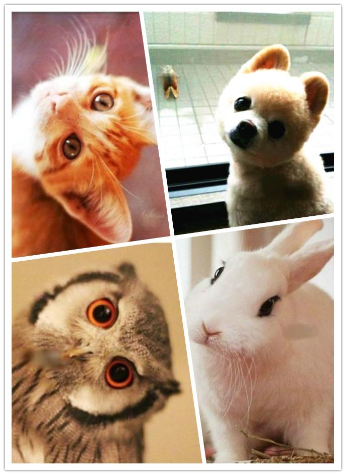 可爱的大熊猫,温顺的小白兔,永远萌味十足的猫咪咪等等纷纷加入歪脖的