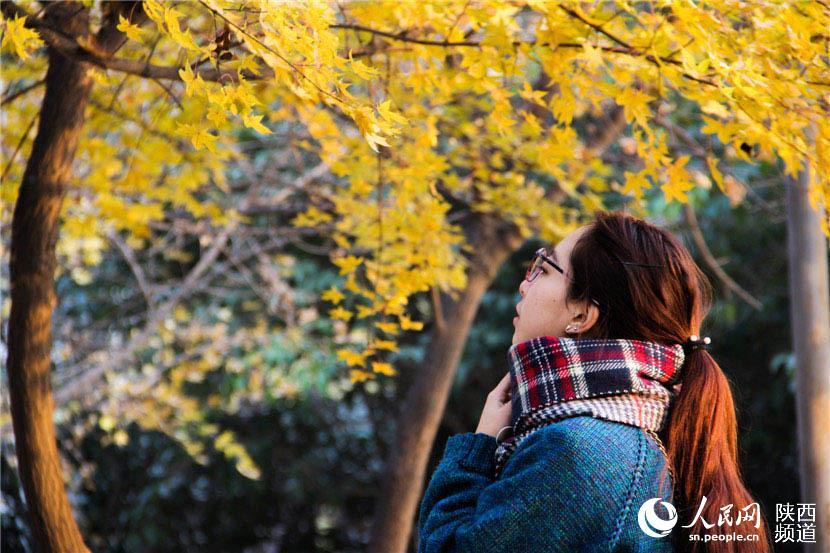 5500,深秋黄昏夕阳下(原创) - 春风化雨 - 诗人-春风化雨的博客