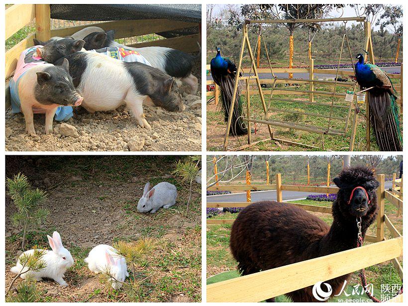 花博会萌宠乐园中的部分小动物可与游客进行互动