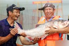 常州:长荡湖秋捕 鱼跃人欢