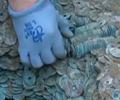 陕西发现北宋时期钱币库        考古工作人员在白水县城一处天然气管道施工现场发现一批重达920多斤的古钱币。