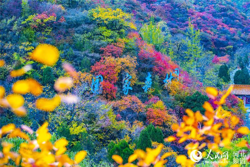 河北井陉:漫山遍野秋意浓