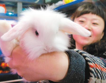 """""""宠物兔品种繁多,常见的有垂耳兔,熊猫兔,茶杯兔,荷兰兔,狮子兔等."""