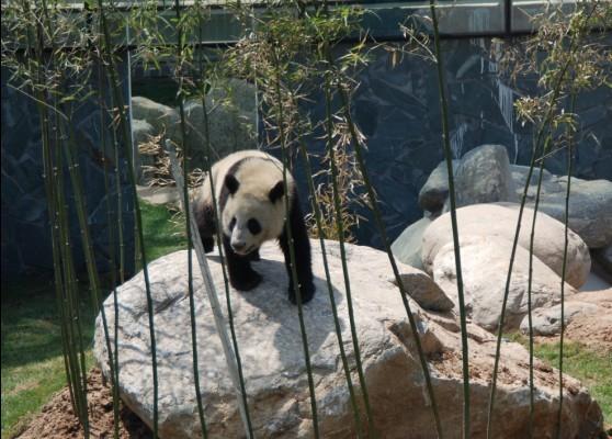 这些珍贵动物从陕西省珍稀野生动物抢救饲养研究