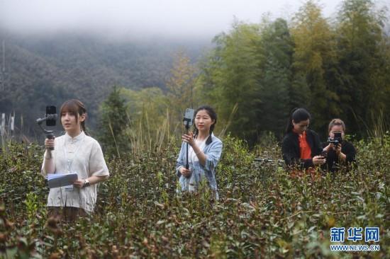杭州临安:高山乐虎国际有机茶助农增收